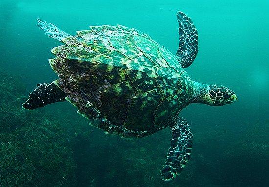 Scuba Diving Pattaya