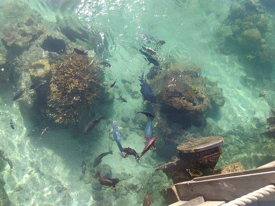 Les bungalow sur pilotis photo de intercontinental for Chambre 13 tahiti plage mp3