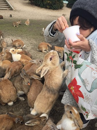 ‪‪Takehara‬, اليابان: Okunoshima Island Visitor Center‬