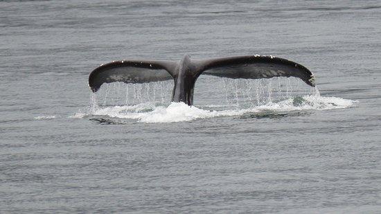 Campbell River, Καναδάς: Man sieht auch Buckelwale auf der Bärentour.