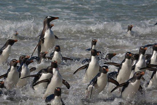 West Falkland صورة فوتوغرافية