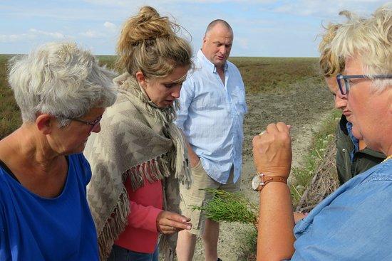Marrum, The Netherlands: Op it Noarderleech met de kwelderkar van de Seedykstertoer
