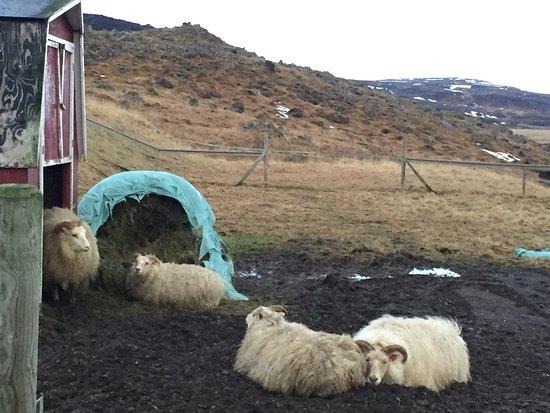 Bifrost, Islandia: photo2.jpg