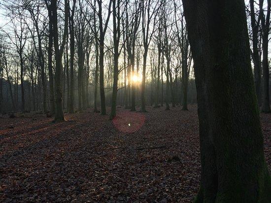 Challock, UK: December 2016