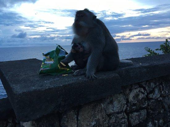 Pura Ulun Siwi: Красивое место, много обезьян и невероятный обрыв. Советую приезжать сюда на закате.