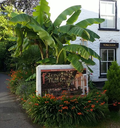 Tongdam Thai Restaurant: The Banana Tree is around 10 years old and doubles in size each year