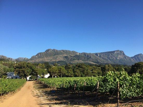 Constantia, Republika Południowej Afryki: photo2.jpg