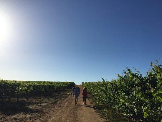 Constantia, Republika Południowej Afryki: photo3.jpg