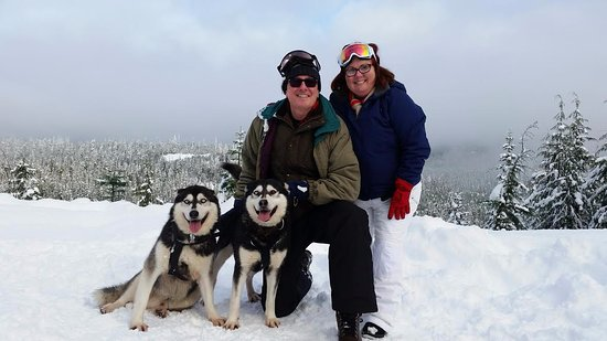 Whistler Blackcomb: At a break point while dog sledding, fantastic views.
