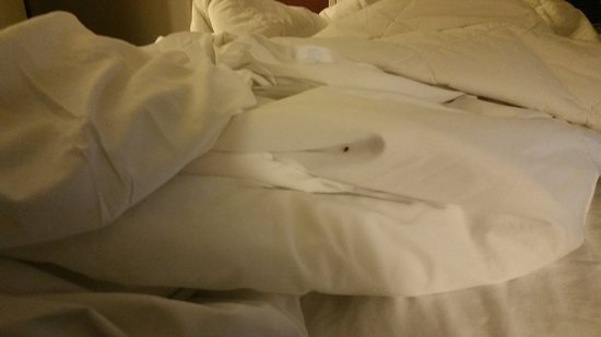 Decatur, IL: BED BUGS