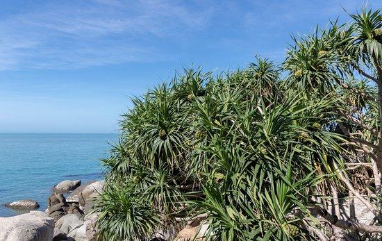 Sanya Daxiaodongtian Area: Ананасы на деревьях