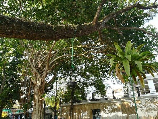 Moratuwa, Sri Lanka: IMG_20161216_084518_large.jpg