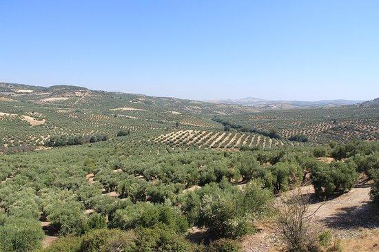 Umgebung von Zuheros vom Radweg Via Verda (stillgelegte Eisenbahnstrecke)