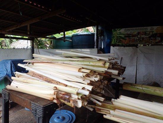 Kosrae, Micronesia: 材料のバナナの幹