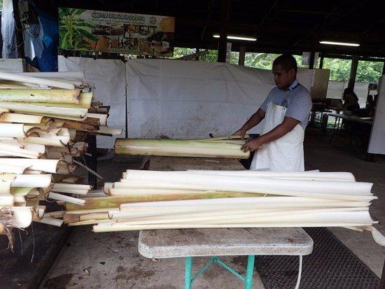 Kosrae, Micronesia: バナナの幹の加工
