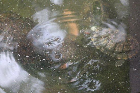 Hotel Las Olas Beach Resort: The turtle pond is a great metaphor