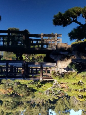 Hayward Japanese Gardens All You Need To Know Before You