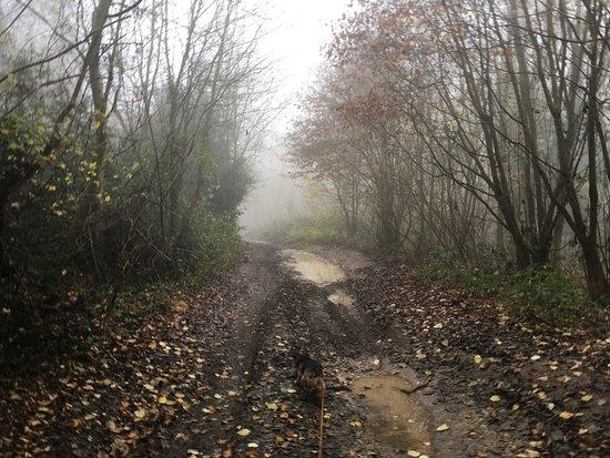 Alderbury, UK: Track to the woods. Take wellington boots!