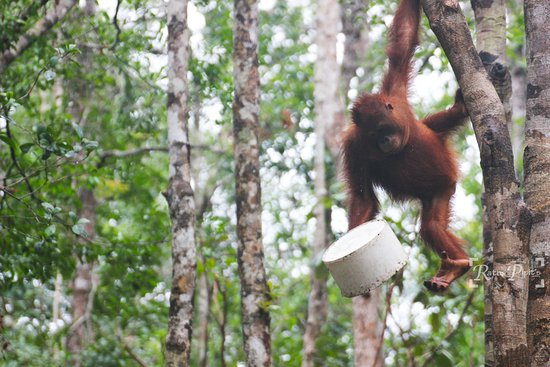 Be Borneo Tour (Palangkaraya) - 2018 All You Need to Know Before You Go  (with Photos) - TripAdvisor
