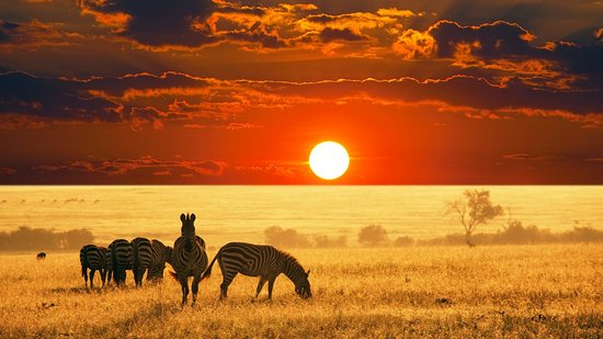 Ombeni African Safaris - Day Tours