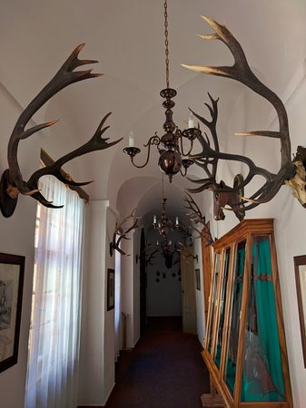 The hunting displays.