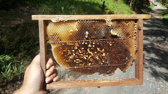 Кудат, Малайзия: The Beeswax Frame from the box