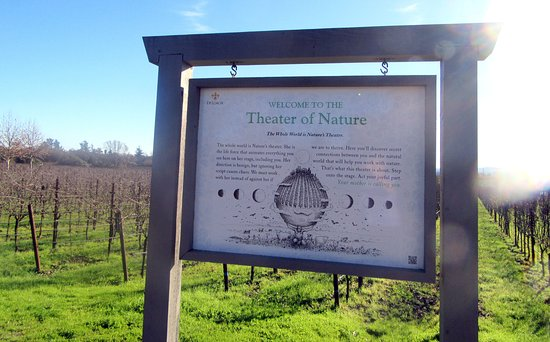 Theater of Nature, DeLoach Vineyards, Santa Rosa, CA