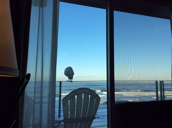 Pelican Shores Inn Picture