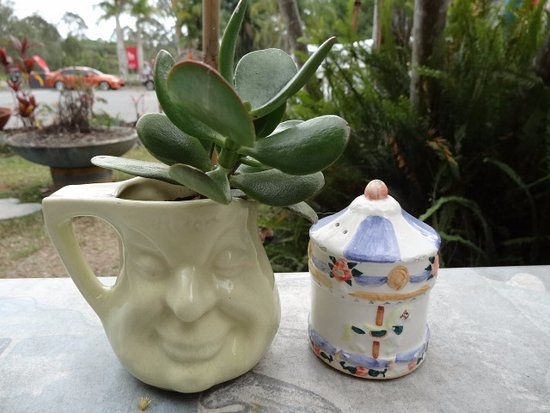 Doonan, Australien: Love that pot as a plant