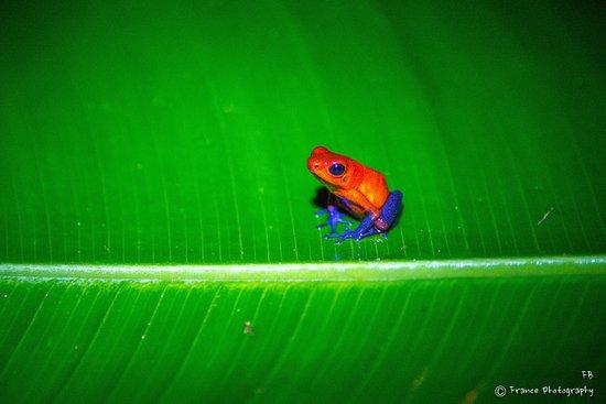 Frogs Heaven