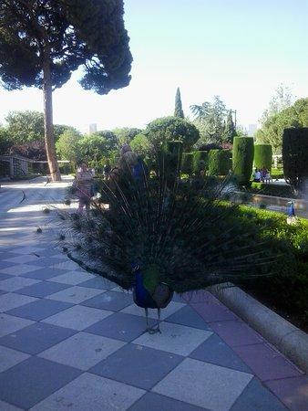 Pabellon de los Jardines de Cecilio Rodriguez