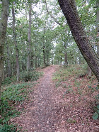Sesselbahn in Boppard: Woods at the Sesselbahn