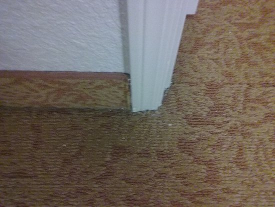 Country Inn & Suites By Carlson, Georgetown: Dirty Floors Throughout Suite