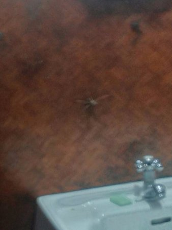 Coffea Aroma Resort - Wayanad: Spider on the wall