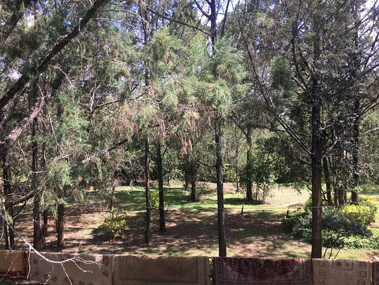 Kongoni Camp: photo3.jpg