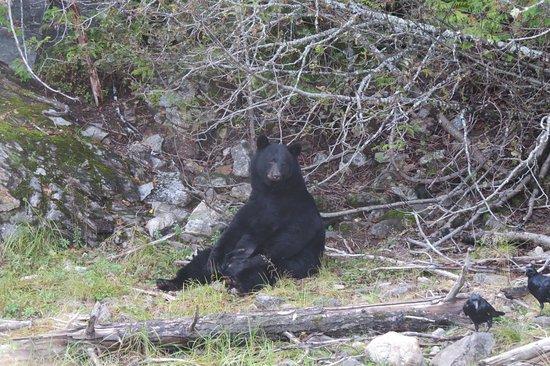 River Safari: bear on close view