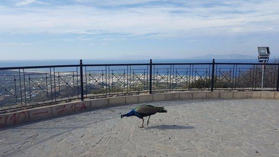 Filerimos, Grecia: Beautiful view and wild peacock