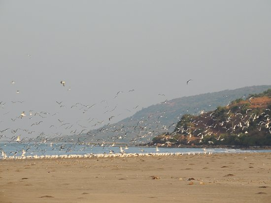 Whistling Waves Beach Resort Dapoli Maharashtra Hotel Reviews Photos Rate Comparison