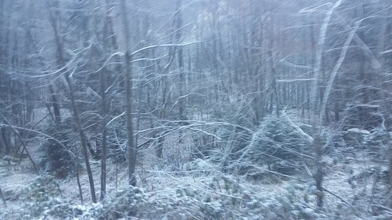 Vigezzina-Centovalli Railway : 20161216_113336_large.jpg