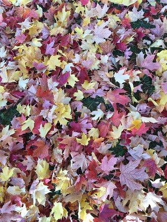 Odell Park: photo0.jpg