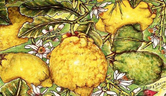 Giardini-Naxos, Italia: piatto con limoni e cedri siciliani