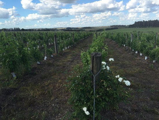 The Wine Experience: Winery