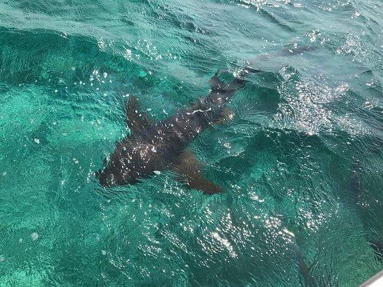 Aqua Scuba Center : 100's of sharks