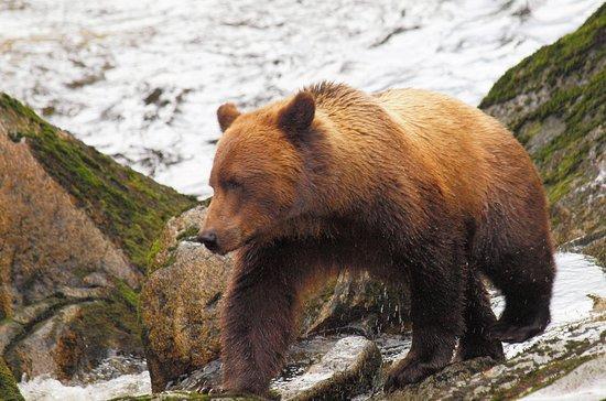 Wrangell, AK: Anan Creek Bear Observatory