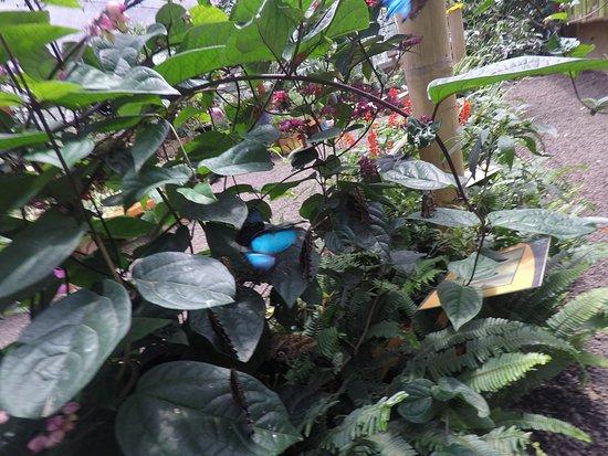 Mariposas de Mindo: Papillon