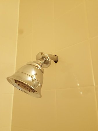 Holiday Inn Chicago North Shore (Skokie): Drity shower head with backplate hanging loose from the wall