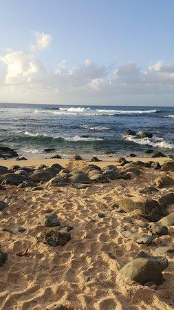 Paia, Hawaje: Nesting turtles