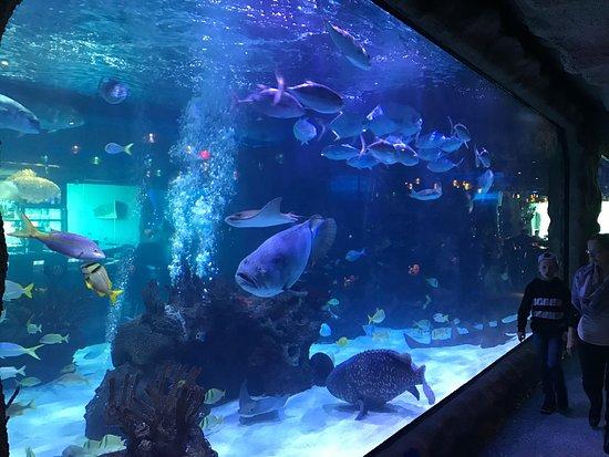 Aquarium Restaurant: photo0.jpg