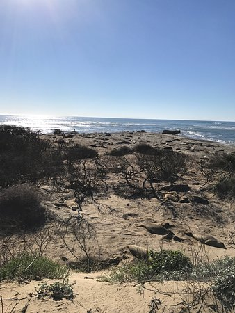 Pescadero, Californien: photo1.jpg