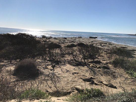 Pescadero, Californien: photo3.jpg